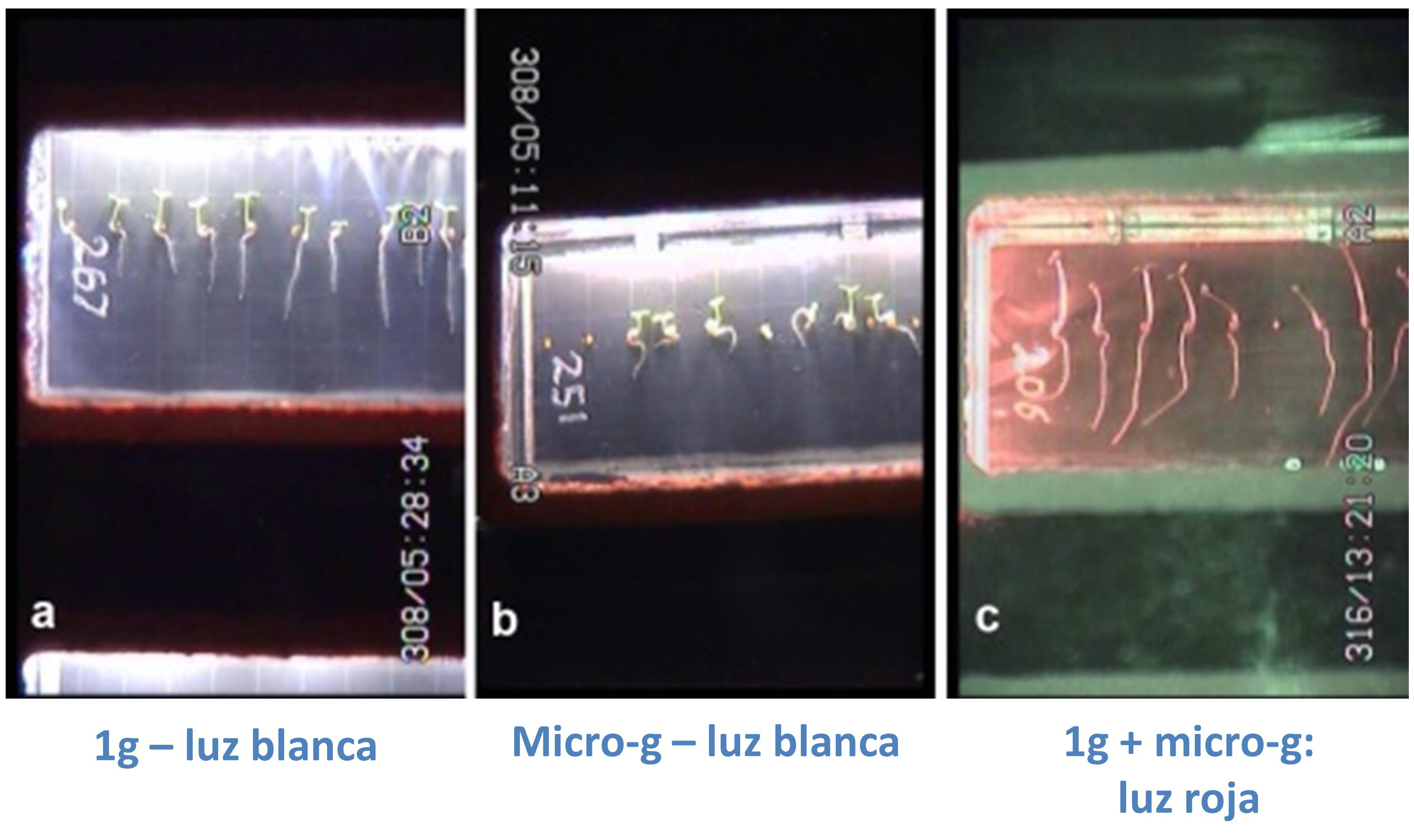 Images taken from Seedling Growth SG-2 experiment